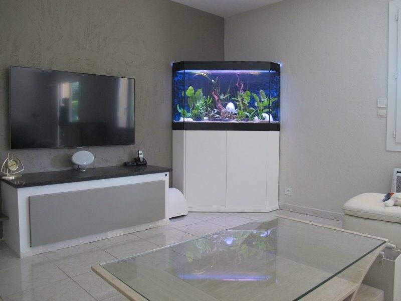 Fabrication vente aquariums eau douce odyssee aquarium for Aquarium angle