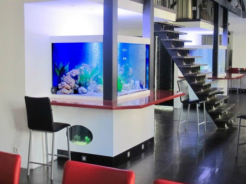 fabrication vente aquariums eau douce odyssee aquarium