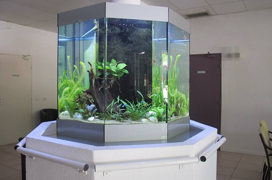 fabrication vente aquariums eau douce odyssee aquarium odyssee v g tale. Black Bedroom Furniture Sets. Home Design Ideas