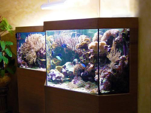 Aquarium eau de mer 91 for Aquarium de mer