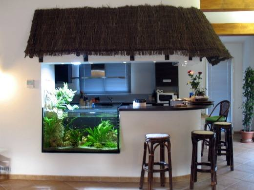Fabrication vente aquariums eau douce odyssee aquarium for Decoration aquarium maison