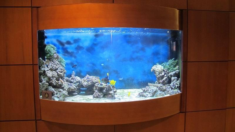 fabrication vente aquariums eau de mer recifal odyssee. Black Bedroom Furniture Sets. Home Design Ideas