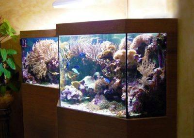 aquarium-eau-de-mer-91