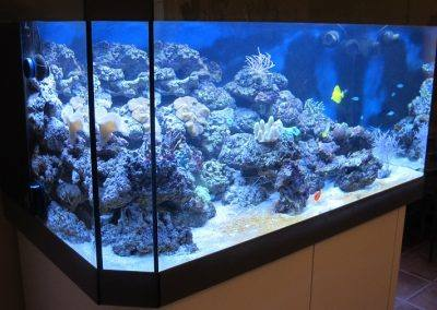 aquarium eau de mer nice
