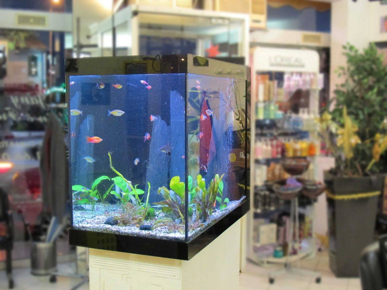 Fabrication vente aquariums eau douce odyssee aquarium for Decoration pour aquarium d eau douce