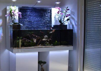 aquarium eau douce mur d eau