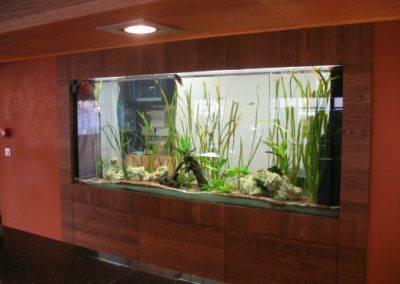 aquarium-encastre-restaurant-61