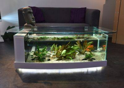 aquarium table cintrée 2