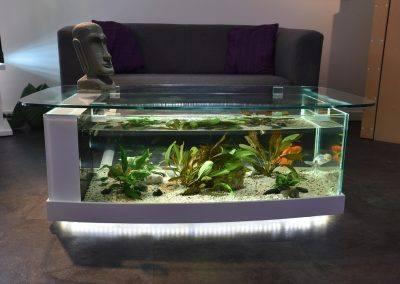 aquarium table cintrée 2