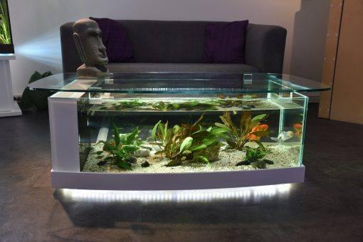 aquarium table basse cintrée