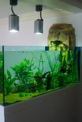 Acheter Un Aquarium fabrication vente aquariums - magasin d'aquarium 06 | odyssee